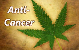 Molecular Biologist Explains How THC Kills Cancer Completely!