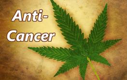Molecular Biologist Explains How THC Kills CancerCompletely!